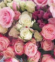 Expressions cambridge hamilton florist