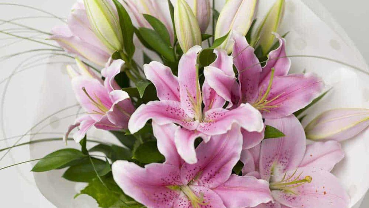 https://expressionsfloral.co.nz/wp-content/uploads/2017/11/Oriental-Lilies-Bouquet-Pink-1200x675.jpg