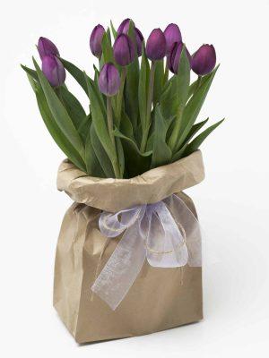 tulips-purple-seasonal-flowers-expressions-florist-cambridge-nz-hamilton